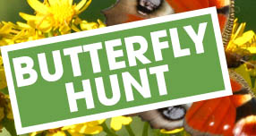 Butterfly hunt thumbnail