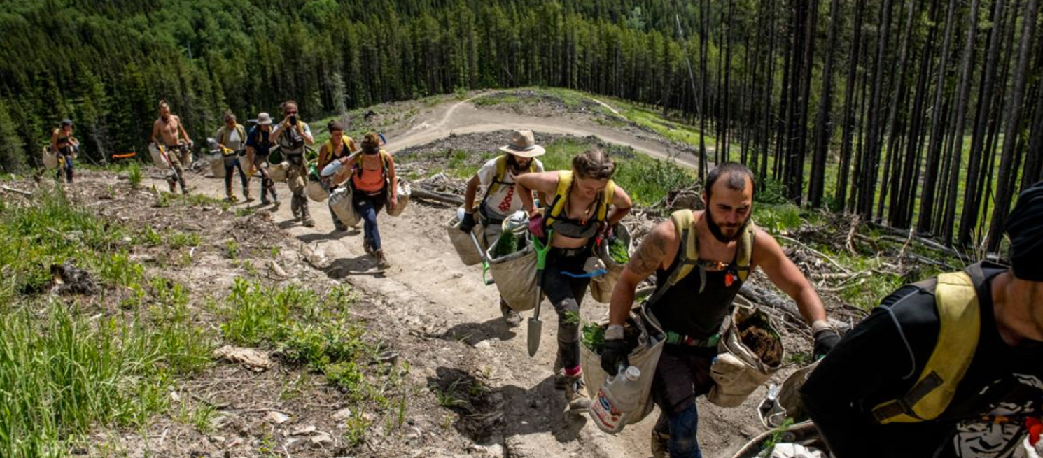 Tree planters head into the wilderness in Canada - by Luc Forsythe