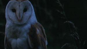 An owl at night