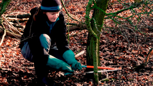 Volunteer coppicing
