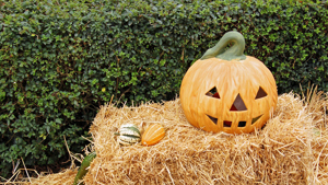 A pumpkin on a hay bale