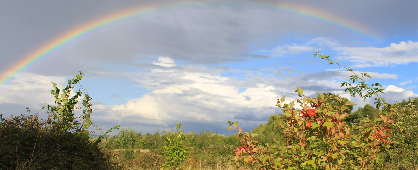 Rainbow at Folly Wood