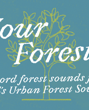 Celebrate England's Urban Forests with #YourForest