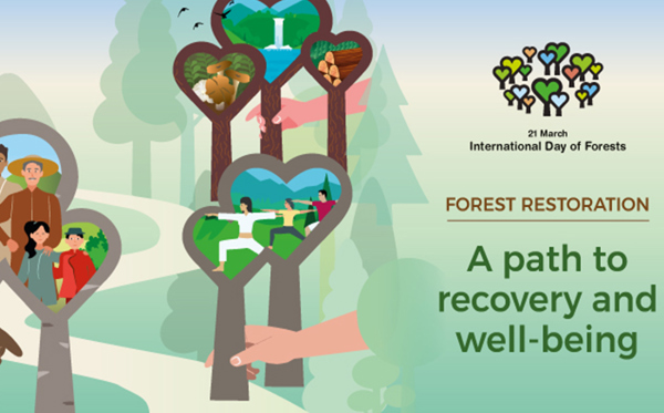 Every tree counts... International Day of Forests #IntlForestDay