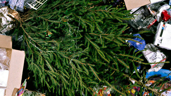 Discarded Christmas Tree surrounded by rubbish