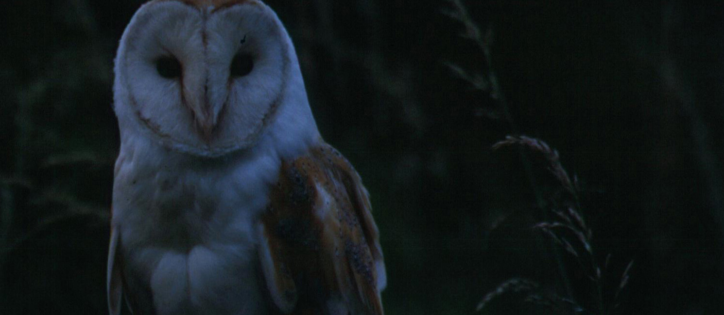 An owl in the dark