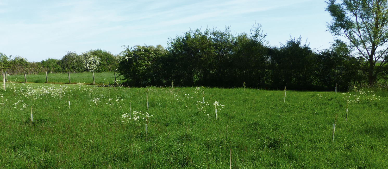 Photo of saplings in a field