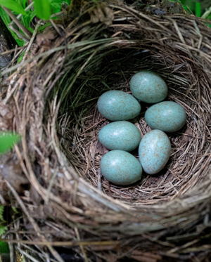 Nesting birds - creating the ideal home