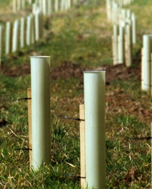 Tubes on newly planted trees