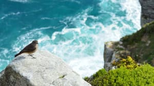 a bird sits on a cliff, by the sea