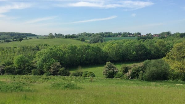 View from hill at Rectory Wood