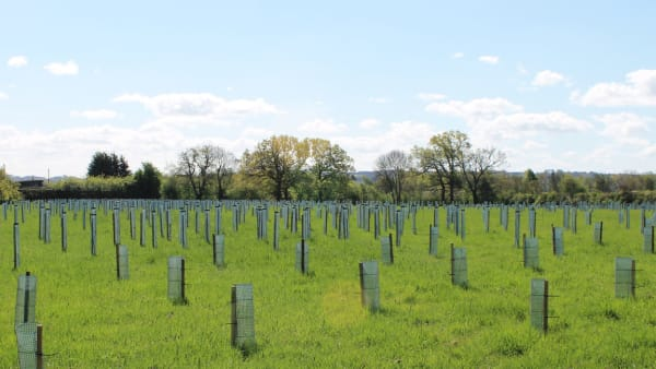 Hundreds of newly planted trees at Wood End  Thrift